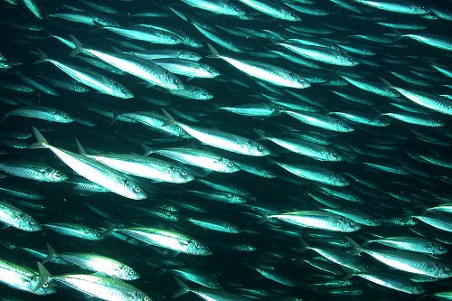 Faroe Islands and EU resolve herring crisis