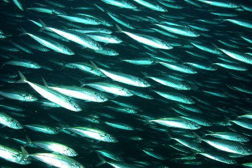 Faroe Islands and EU resolve herring crisis