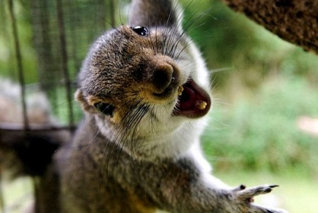 Happy Ending For Norwegian Squirrels After Cat Attack Icenews Daily News