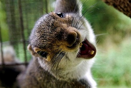 Happy ending for Norwegian squirrels after cat attack