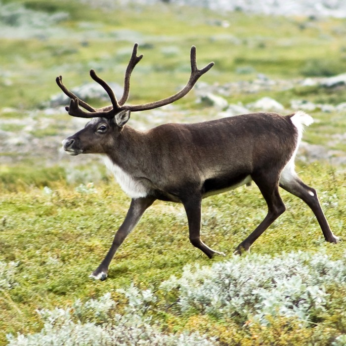 48 reindeer killed in train accident