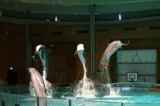 Animal rights group hands Tampere dolphinarium unwanted award