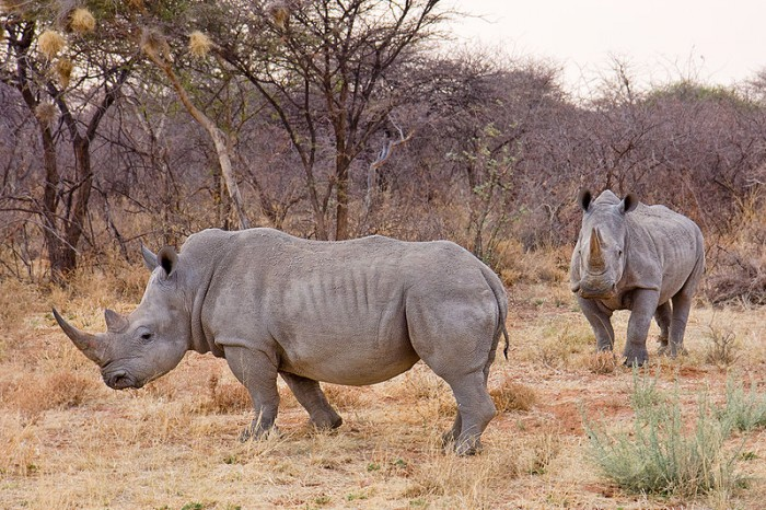 Swede released in Mozambique after rhino poaching incident