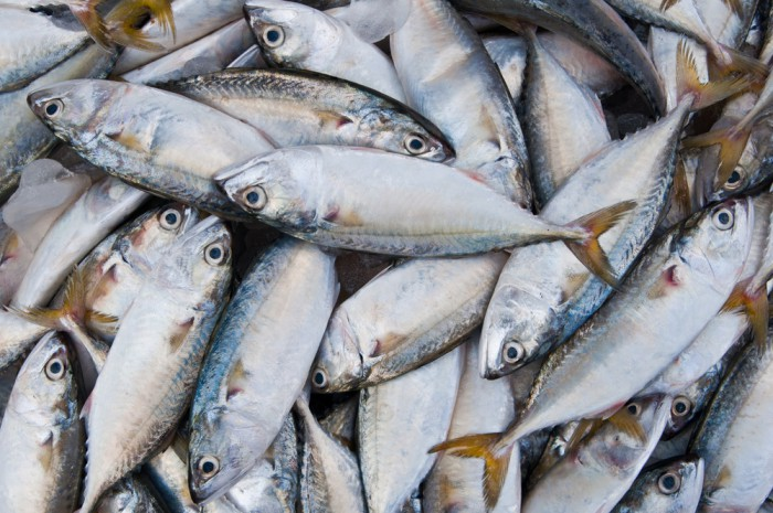 Iceland: 11% fall in catch value in 2014