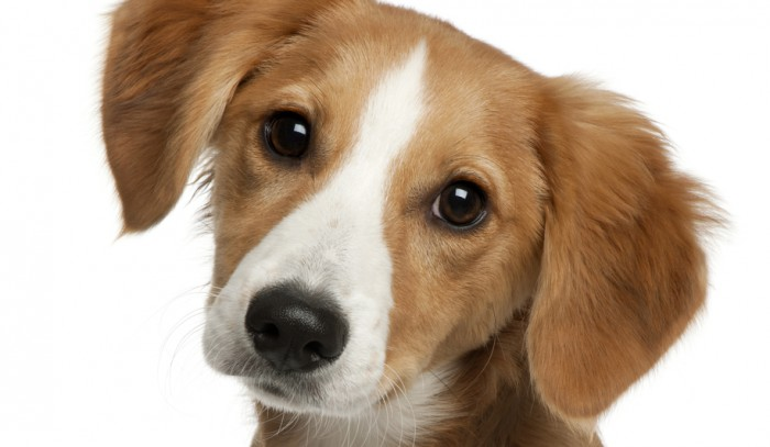 Animal rights group angered by dog-dying trend