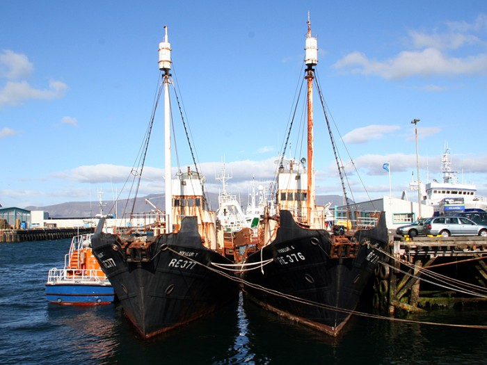 Whale season begins in Iceland with activists' incident