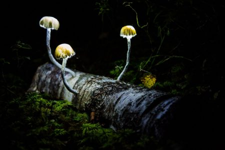 Artists Light Up the Dark in Norwegian Forest