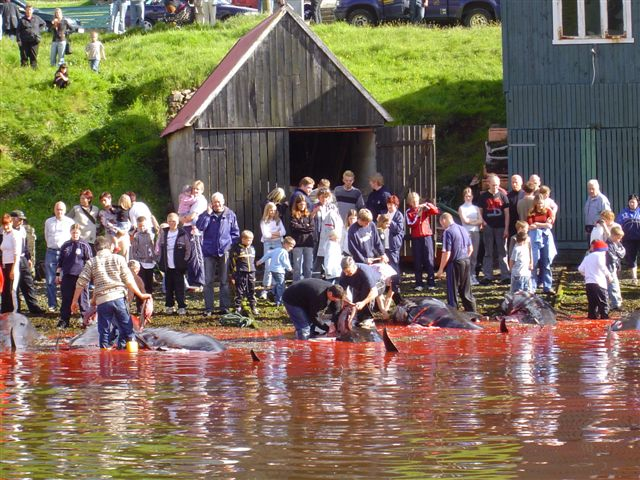 Annual pilot whale killings in the Faroe Islands – An ongoing debate.
