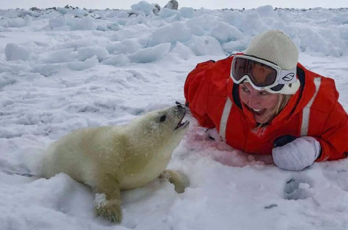 Seal-tourism: On Canadian ice with the baby harps