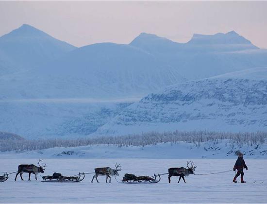 Reindeer bridges to be built over roads and rails in Sweden